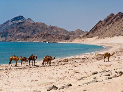 Voyage d'exploration au Dhofar et Rub Al Khali