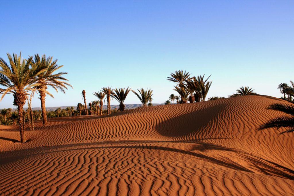 Grandes dunes et petits nomades