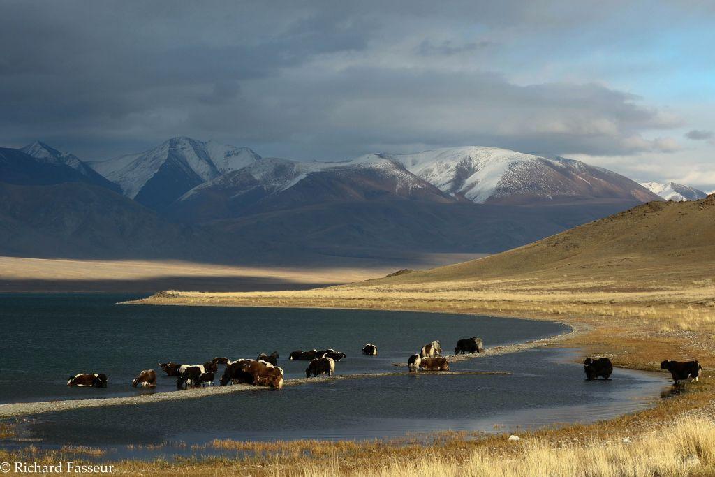 chameaux de Bactriane et yourte mongole sur la steppe mongole en Mongolie