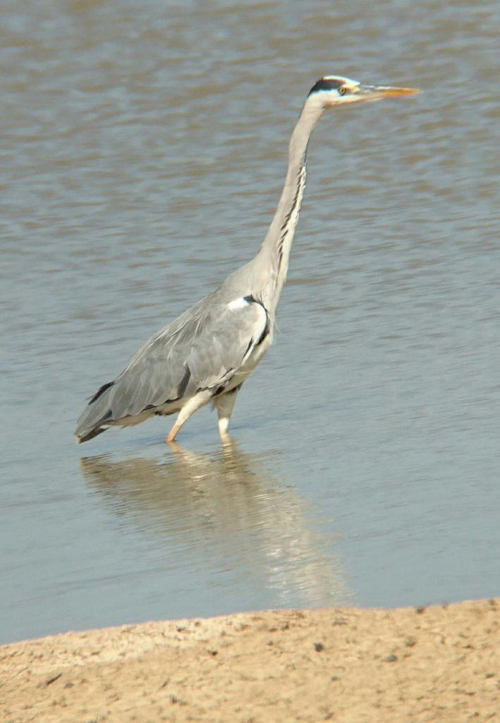 Oiseau Algarve Portugal