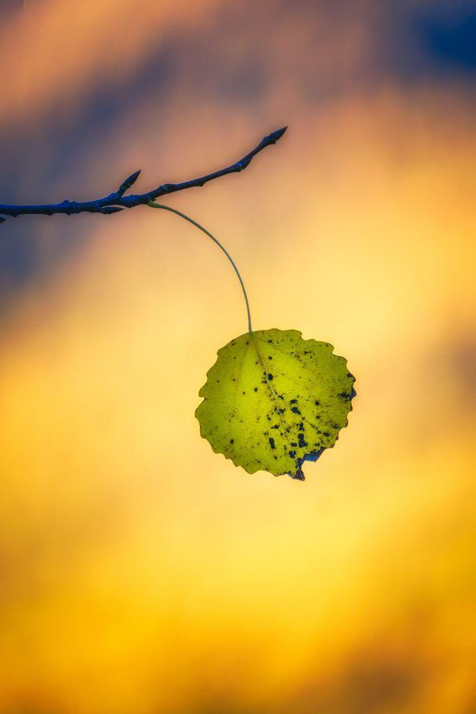 Détail d'une feuille lors d'un stage photo dans le Mercantour à l'automne