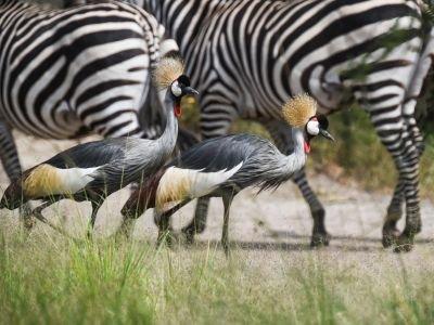 Safari focus Ornithologie en Ouganda