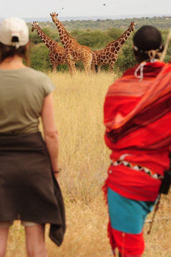 Safari à pied au Kenya, face aux giraffes