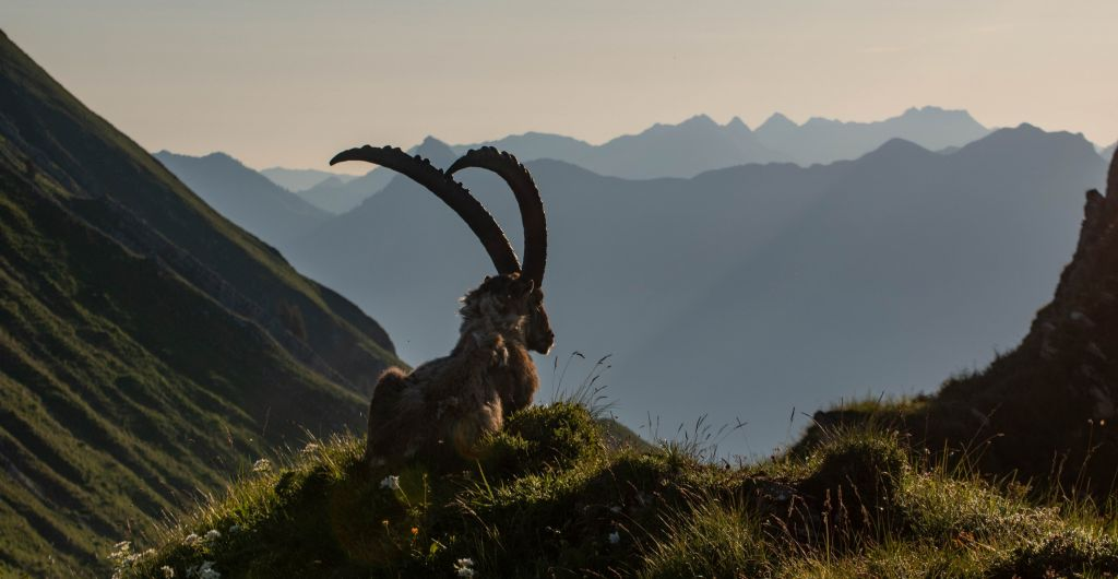 Séjour de Randonnée dans les Alpes au printemps dans la vallée du Champsaur, parc national des Ecrins